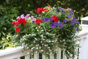 deckflowers2-1